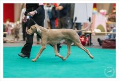 Kouros, Slowaakse Staande Ruwharige Hond, Winner 2012