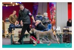 Saphira, Slowaakse Ruwharige Staande Hond, Winner 2012